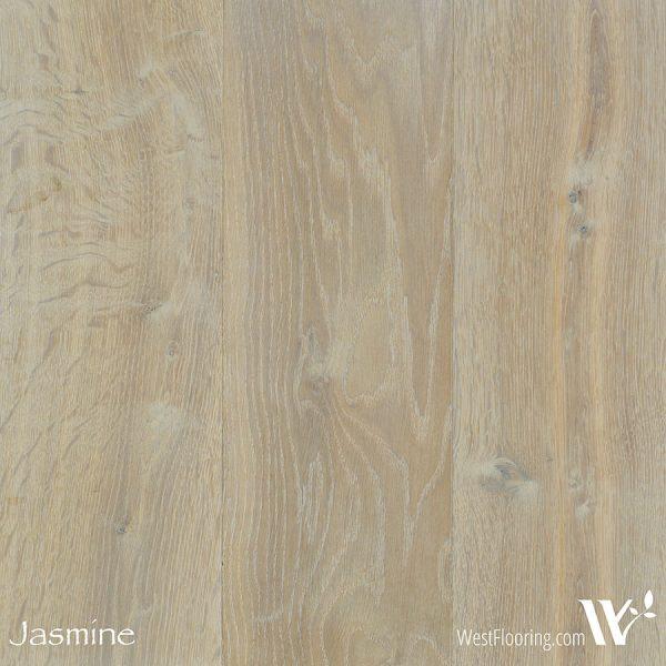 America - Jasmine